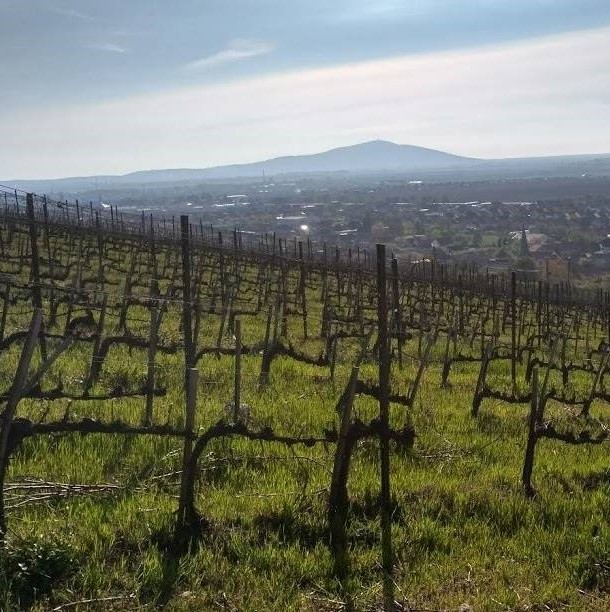 Tokaj-Wine-Region.jpg